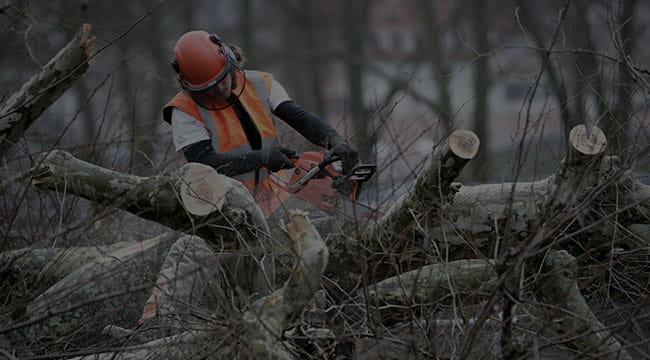 Riverton Tree Service